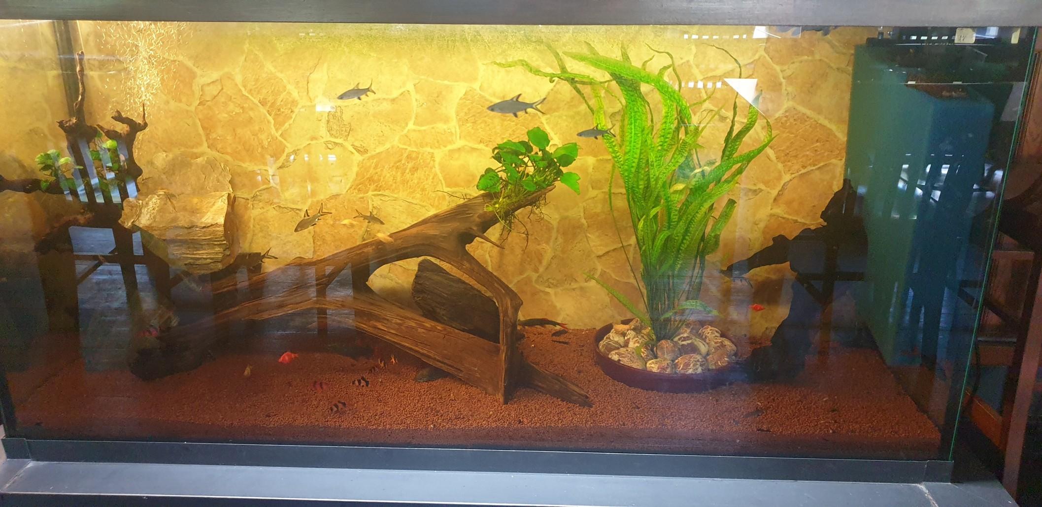 Nově upravené akvárium